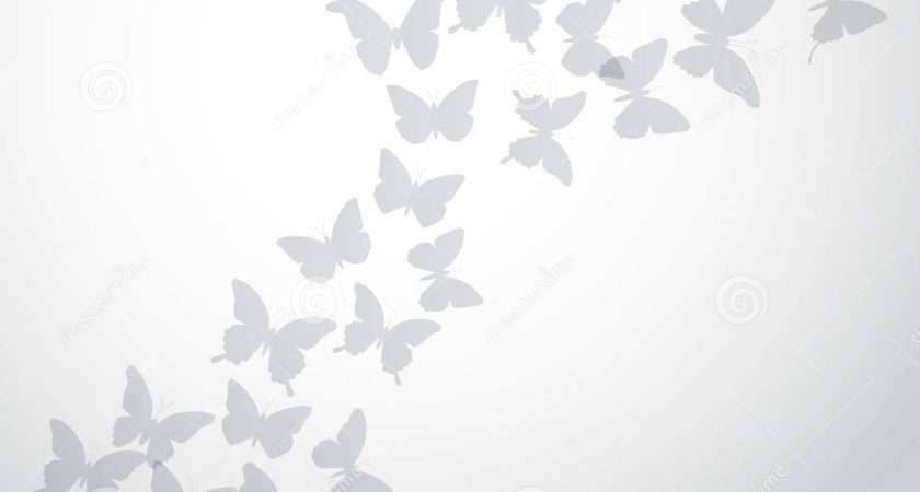 Abstract Gray Butterfly White