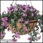Artificial Hanging Baskets Plants Unlimited