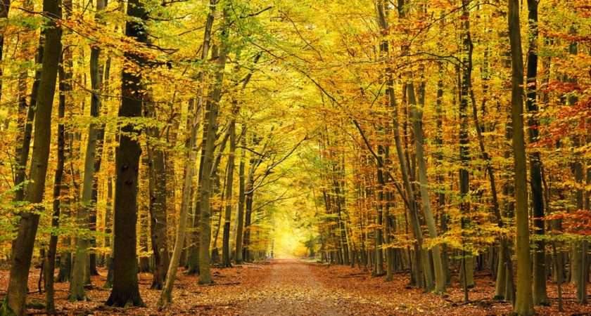 Autumn Forest Woodland Wall Mural Tree