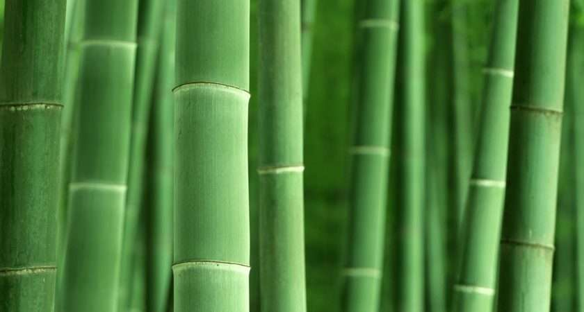 Bamboo Forest High Definition