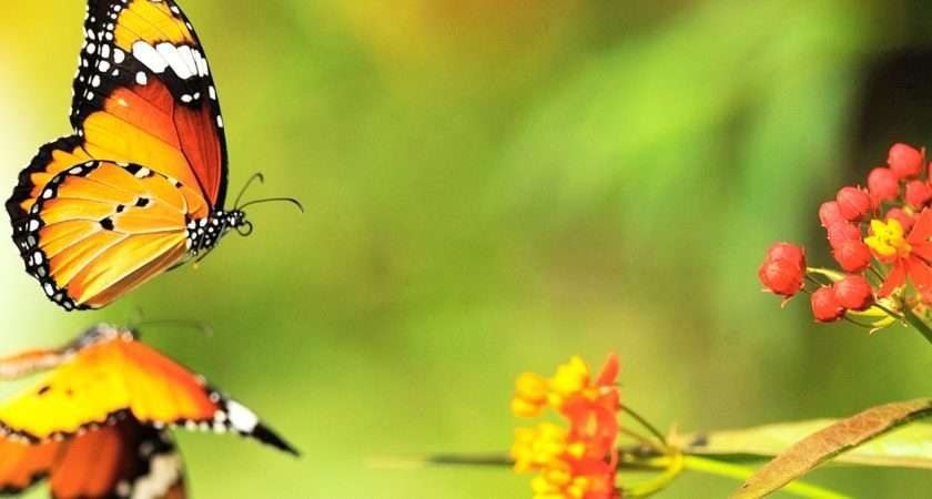 Beautiful Butterfly Group