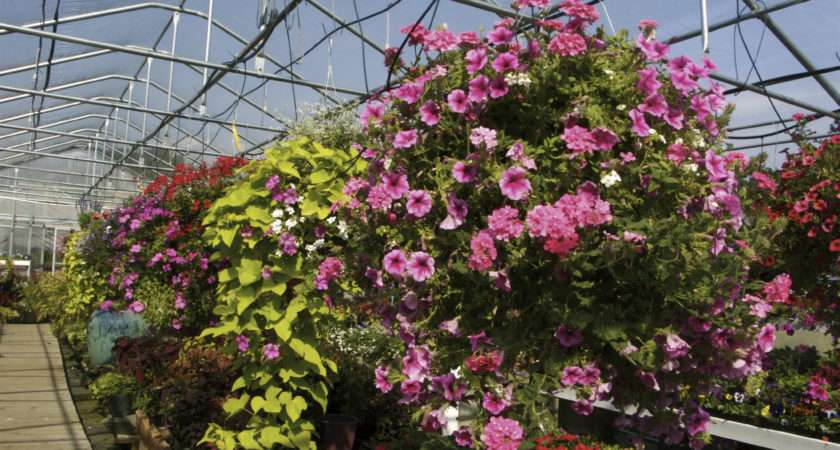 Bedding Pot Plants Hanging Baskets Planters Hortifeeds