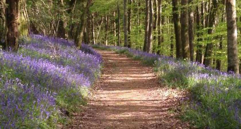 Best National Trust Top British Gardens Catch Spring Bluebells