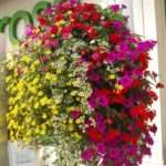 Best Plants Hanging Baskets Ideas