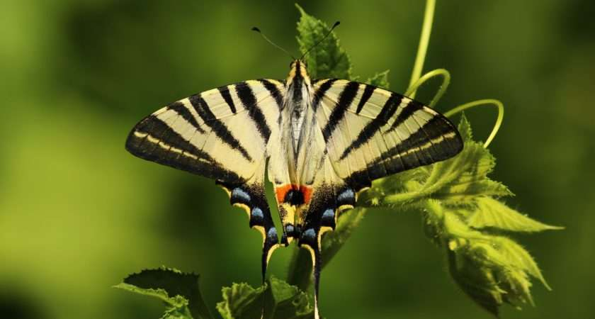 Butterfly Green Animals