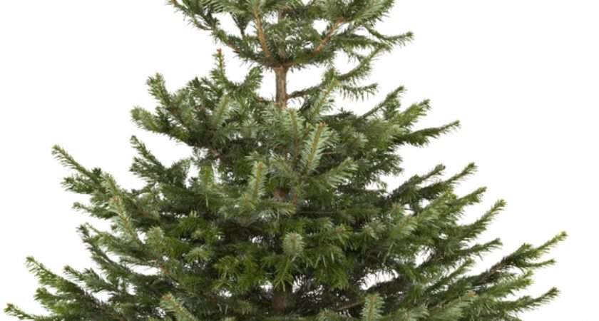 Cheapest Places Buy Real Christmas Tree Year