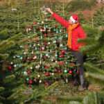 Christmas Tree Deal Real Nordman Fir Sale Just