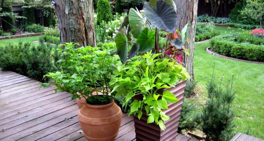 Container Gardening Ideas Small Spaces