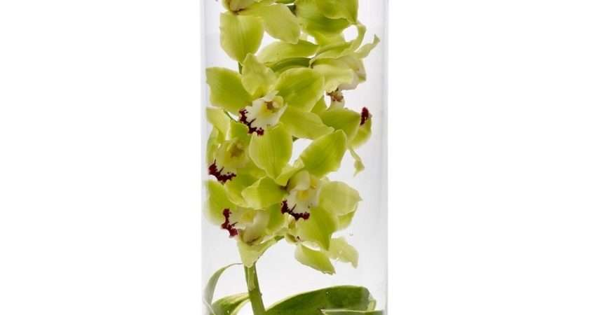 Cymbidium Orchids Del Mar Leaves Tall Glass
