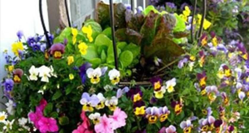 Diy Hanging Basket Vertical Garden Make