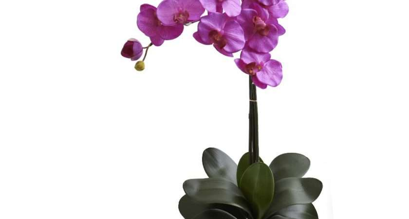 Double Phalaenopsis Orchid Silk Flower Arrangement
