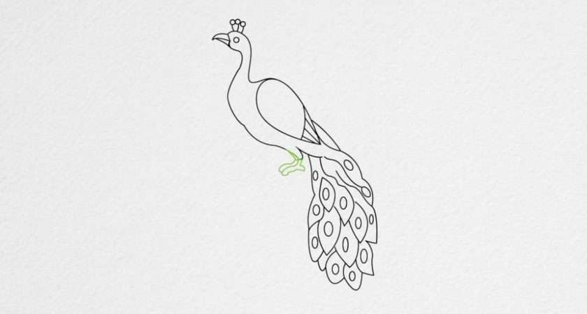 Draw Peacock Step Youtube