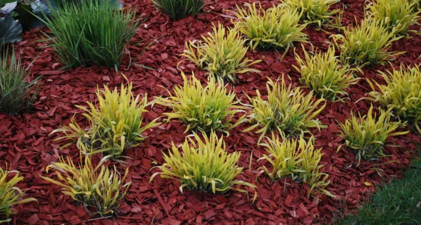 Dyed Mulch Regular Using Colored Gardens