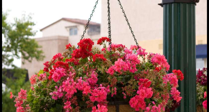 English Garden Flat Steel Hanging Basket Coco