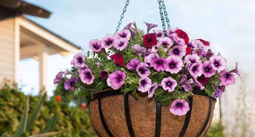 English Garden Flat Steel Hanging Baskets