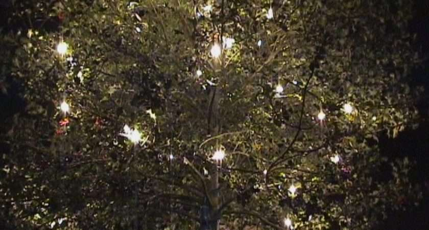 Fairy Lights Promotional Lighting Event