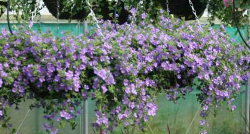 Flowers Hanging Baskets Wire Plant Basket