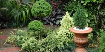 Garden Designs Small Gardens Ideas Home