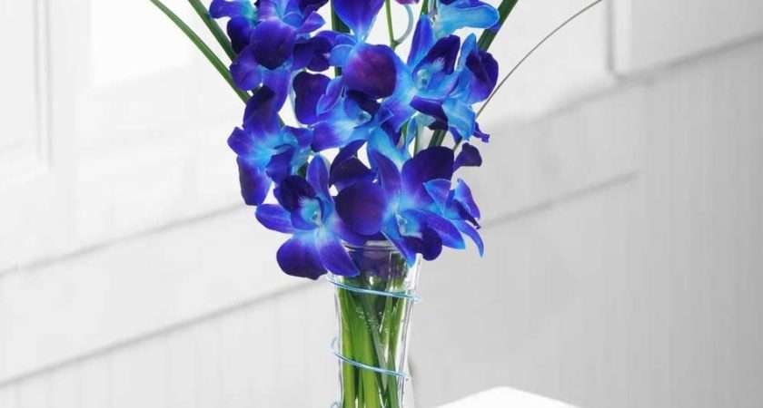 Grandeur Sophistication Orchids Allen