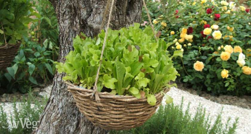 Grow Vegetables Fruit Hanging Baskets