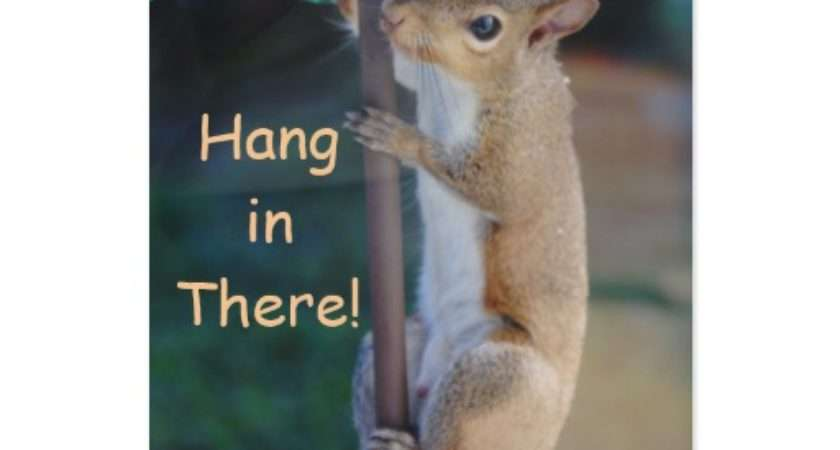 Hang There Squirrel Hanging Bird Feeder Card Zazzle