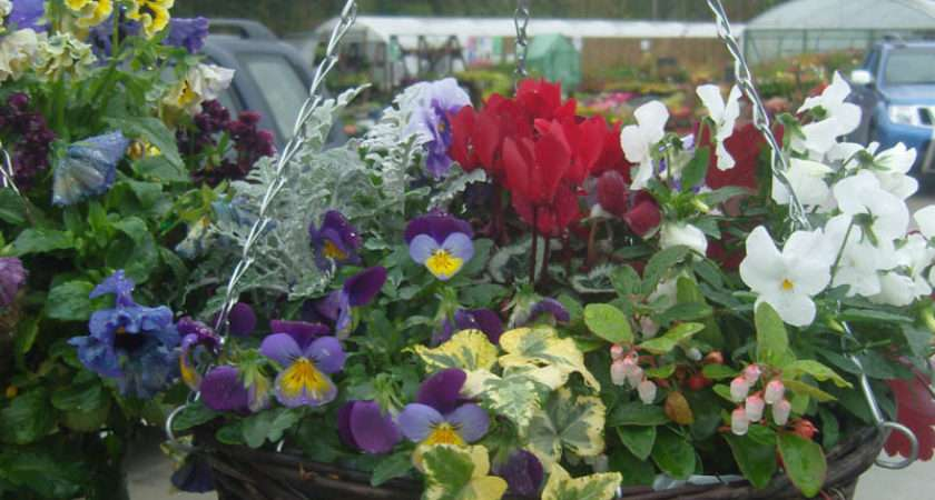 Hanging Baskets Moygannon Nurseries Garden Centre