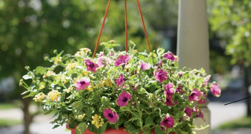 Hanging Baskets Plants Flowers Self Watering