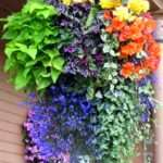 Hanging Flower Basket Inspiration Daily Appetite