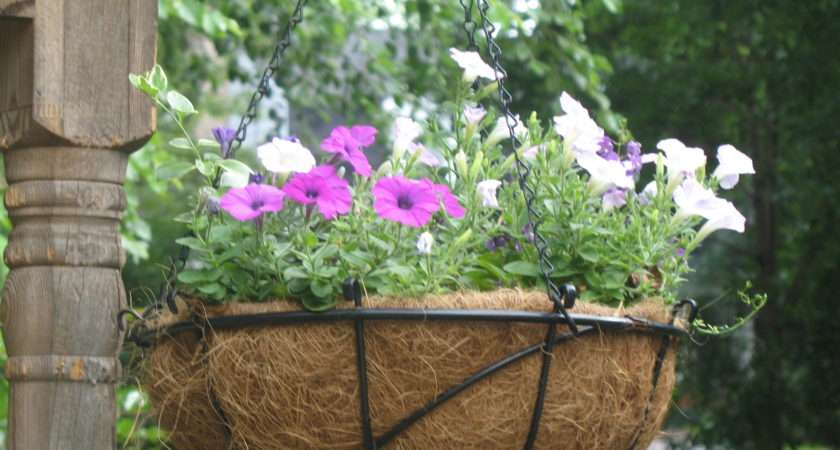 Ideas Hanging Baskets Garden Guides
