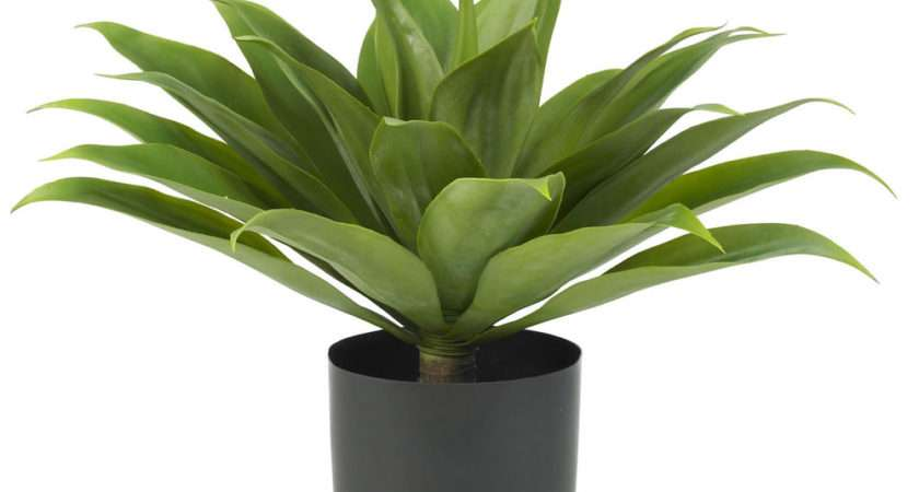 Indoor Outdoor Tropical Agave Realistic Fake