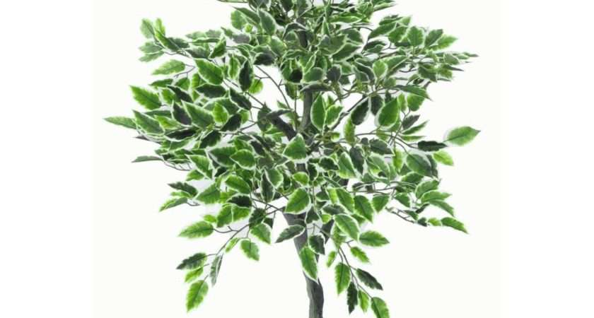 Large Ultra Realistic White Edge Ficus Artificial