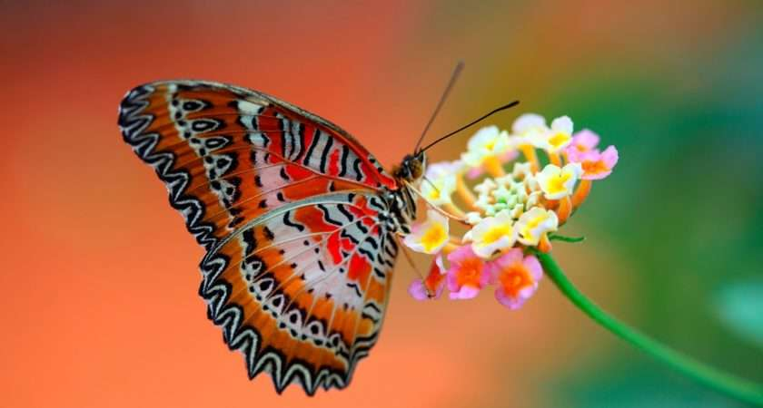 Live Butterfly Beautiful