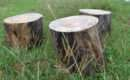 Make Stool Old Tree Trunk Steps