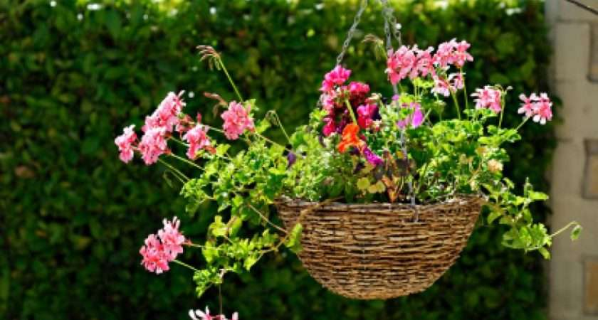 Off Ground Here Some Tips Planting Your Hanging Baskets