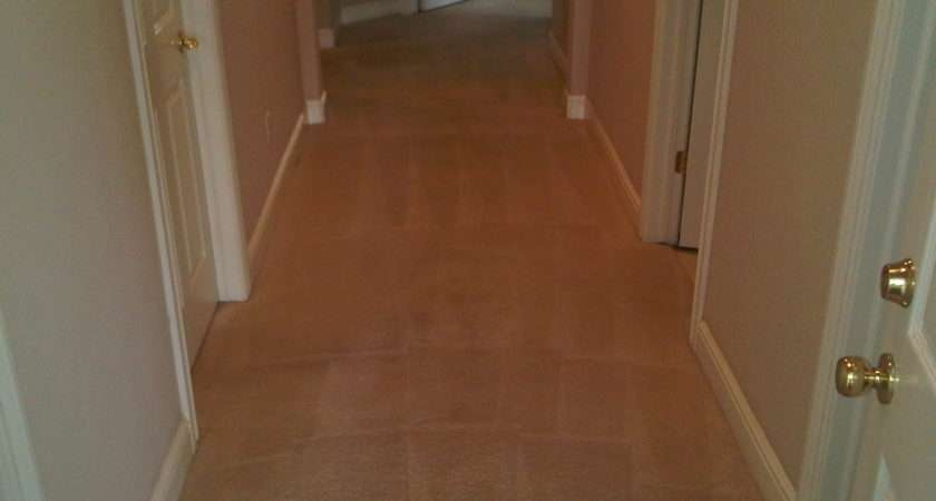 Pet Odors Stains Urine Carpet Wood Apps Directories