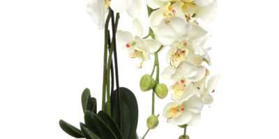 Phalaenopsis Silk White Orchid Glass Vase Reviews