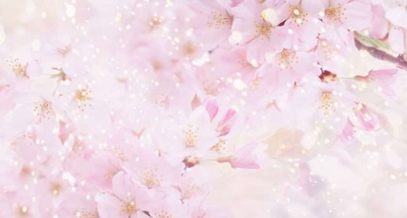 Pink Cherry Blossoms Flowers Light Colored