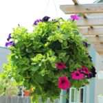 Plant Professional Looking Hanging Flower Basket