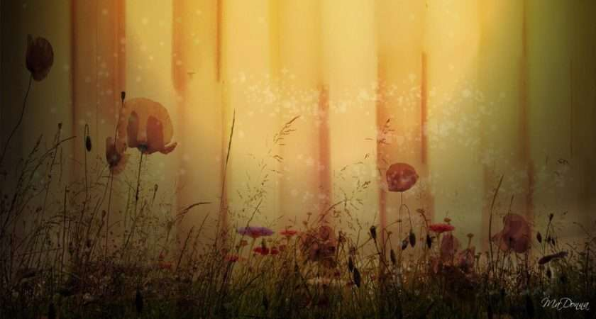 Poppies Wall Forwallpaper