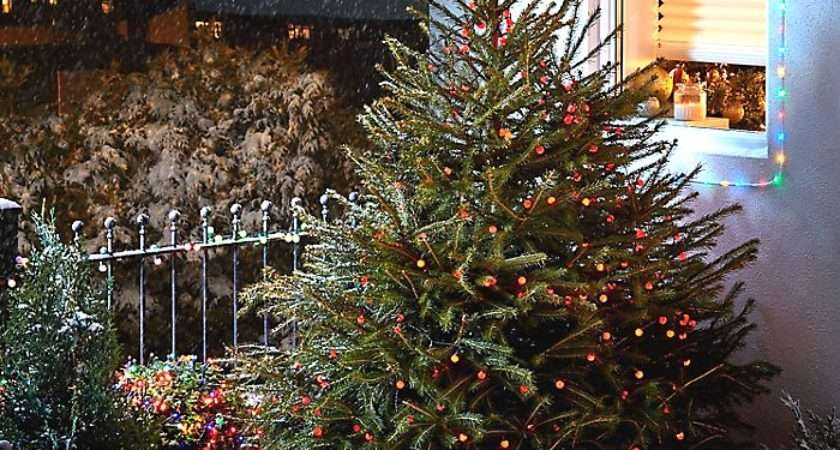 Real Christmas Tree Buying Guide Ideas Advice Diy