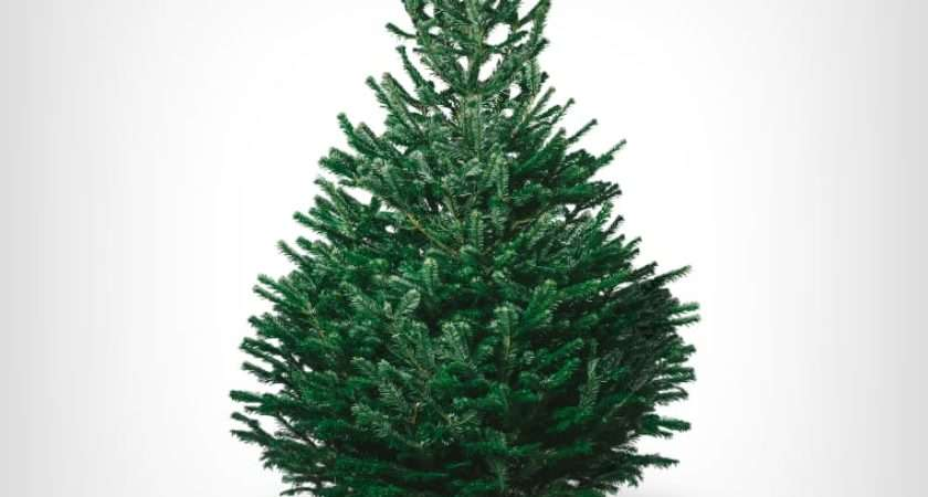 Real Christmas Trees Delivery Pines Needles