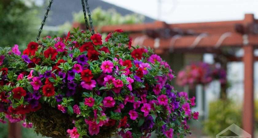 Red Flowers Hanging Baskets Wide
