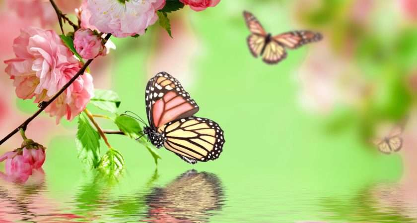 Selection Most Beautiful Butterfly