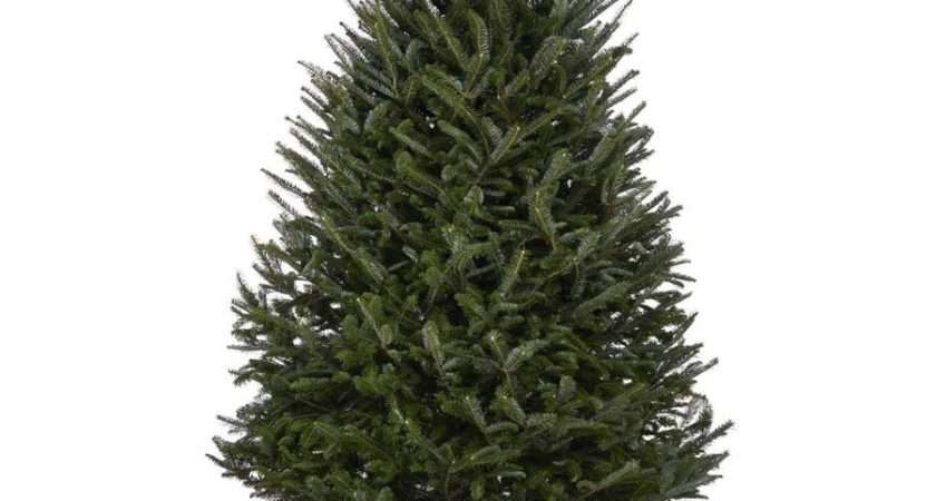 Shop Fraser Fir Real Christmas Tree Lowes