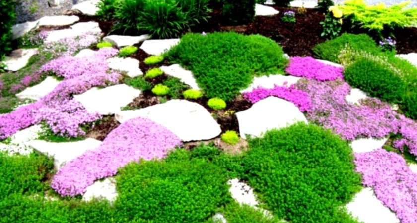 Simple Landscaping Ideas Front Yard Budget