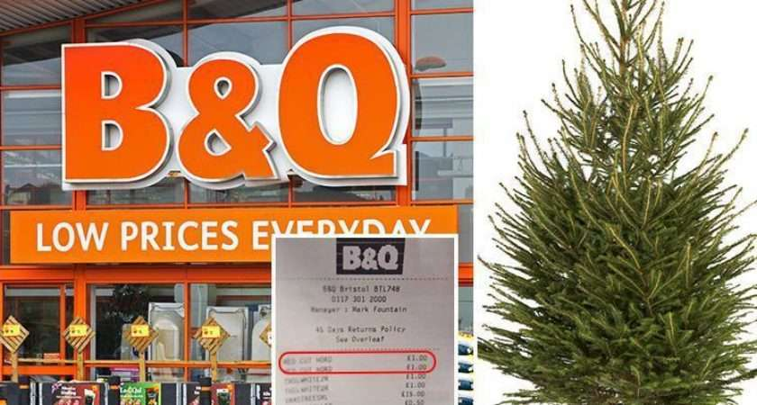 Slashes Price Real Christmas Trees Worth Just