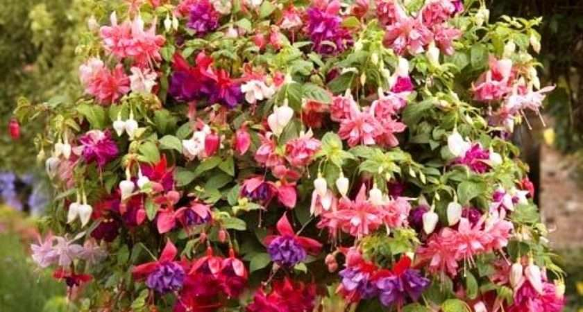 Top Flowering Plants Hanging Baskets Greenmylife