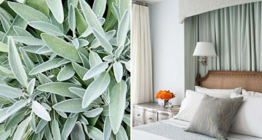 Ways Decorate Soft Sage Green Hgtv