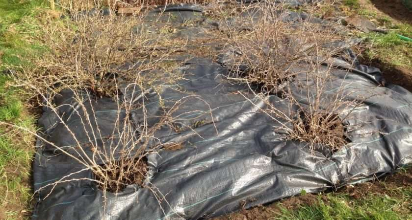Weed Control Fabric Love Learn Allotmenting Blog