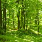 Woodland Wall Murals Forest